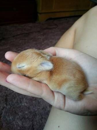dwarf bunny...I want one so bad!!