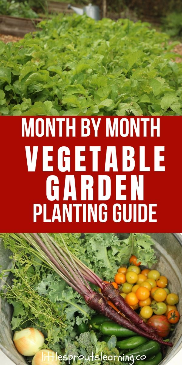 Do you struggle wondering when to plant what vegetables in your garden? Check out this vegetable garden planting guide.
