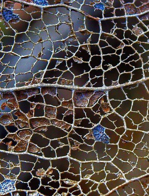Leaf Skeleton, via Flickr.  http://www.flickr.com/photos/jhhwild/6905505981/ this is a leaf Skelton zoomed into. We can see a natural geometric pattern em urges that could be used to developed from to creat on ongoing surface design .