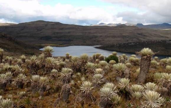 En Sumapaz se encuentran representados dos de los principales ecosistemas de las montañas tropicales: el páramo y los bosques andinos. FOTO: Cortesía PNN