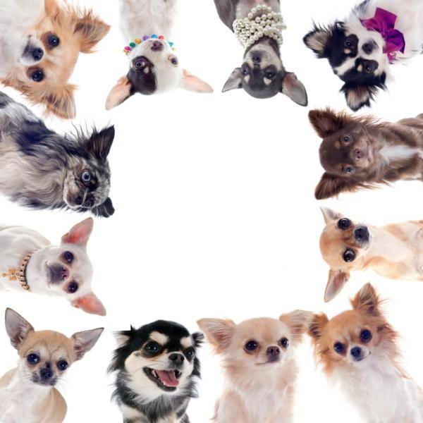 Esta é uma pergunta comum e nós vamos explicar como você pode fazer este cálculo! #animais #cães #cachorros #dogs #animals