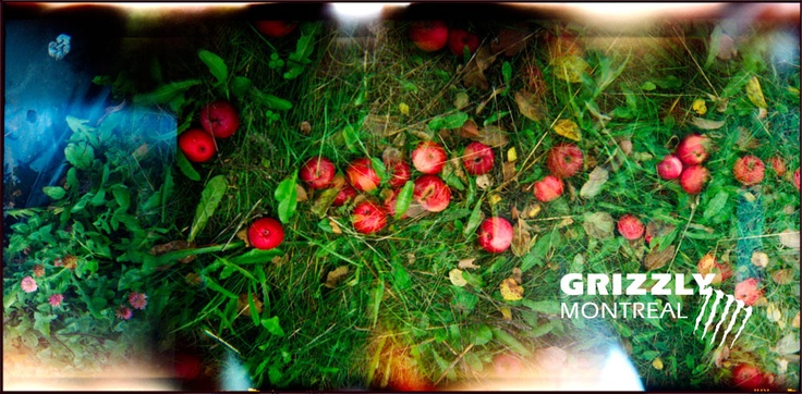 Grizzly Montréal / BLOGUE | Tirages Fine Art en édition limitée