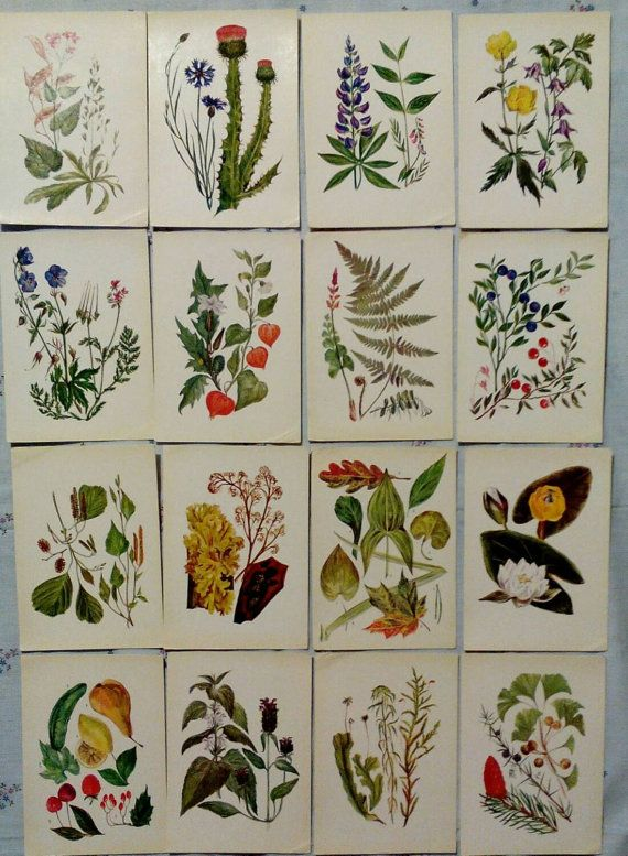 Botanica for young Vintage Russian Postcards set of by LucyMarket
