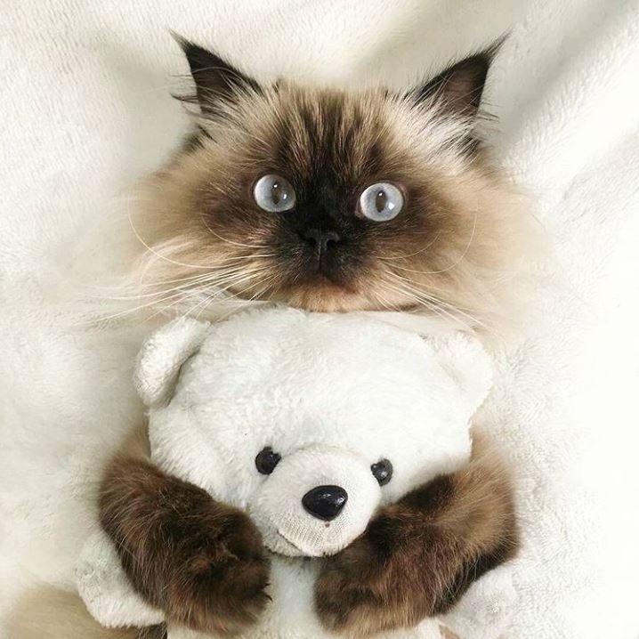 Teddy bear cuddles.