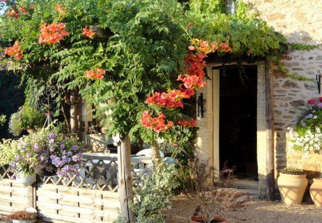 Trompetenblume Pergola Blumen Bepflanzen Italienisch In 2020 Pflanzen Garten Pergola