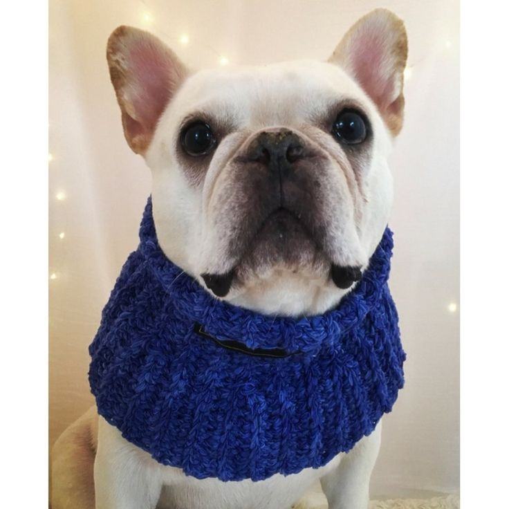 Dressup Demi Cowl – Shimmering Saturated Purple-Blue for medium- to large-necked dogs - Limited Availability