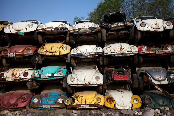 Bug graveyard.  I don't know why car junkyards always make me sad!