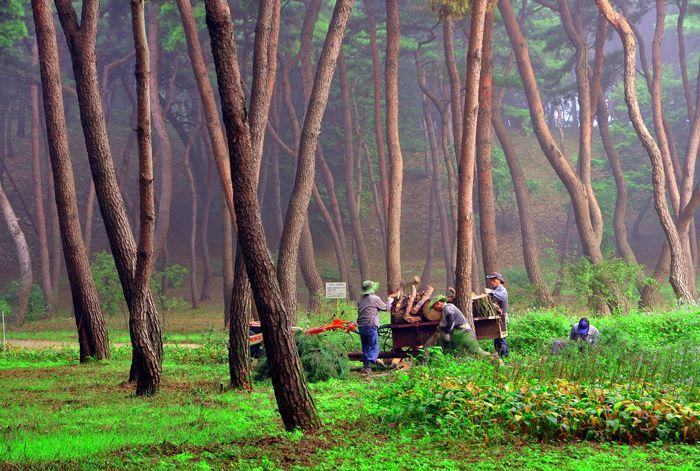 산림문화작품공모전 동상 조춘식(정화작업) ※ 본 저작물의 무단전제 및 재배포를 금합니다. copyright ⓒ 2013 by 산림청(Korea Forest Service) All pictures can not be copied without permission.