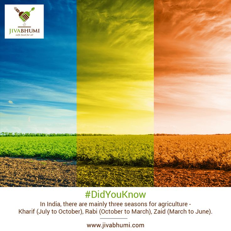 Agriculture in India also follows three distinct cropping seasons i.e. Rabi, Kharif and Zaid. Each season produces different types of natural food which #Jivabhumi brings to you straight from the farms. Shop now: http://bit.ly/shop_jivabhumi #NaturalFood #FarmFood #DidYouKnow