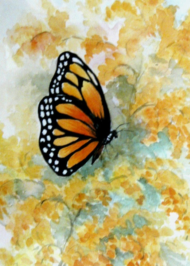 Watercolor Drawings Of Butterflies Monarch Butterfly On