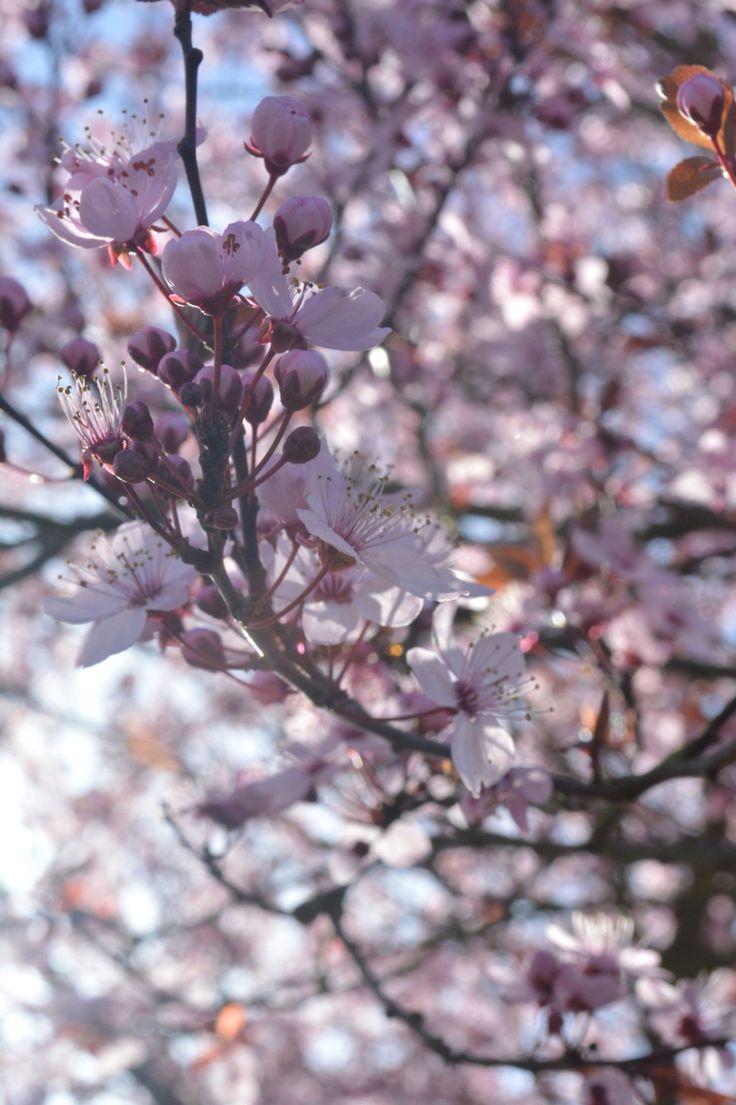 blossoms-Julia Sweet