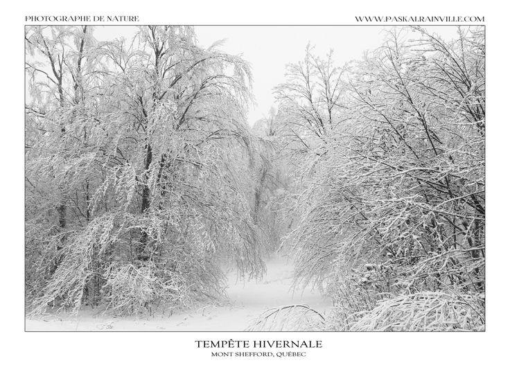 Un paysage d'une blancheur rare après une longue tempête de verglas et quelques centimètres de chutes de neige en haut de cette montagne enneigée.  (Prise à Shefford, Québec, Canada)