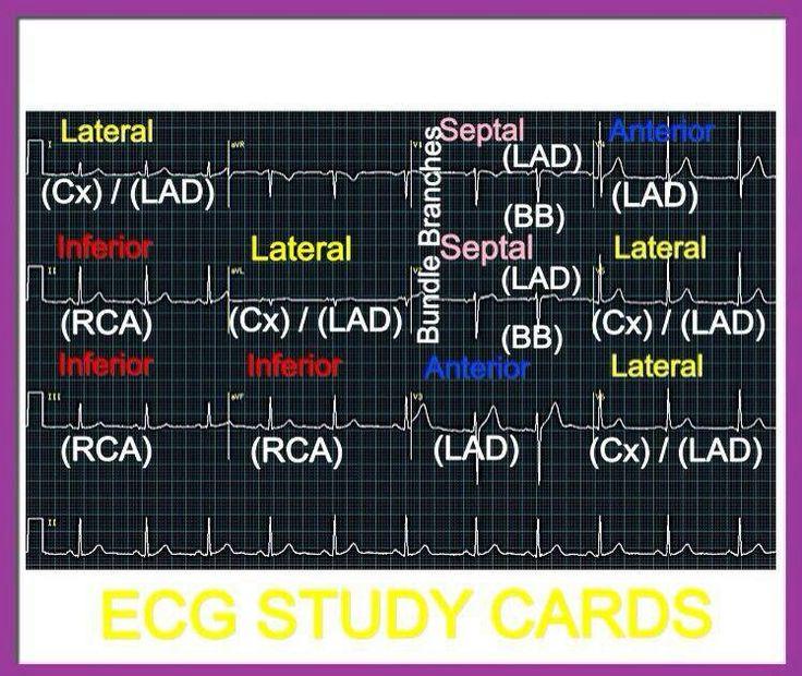 e-Verify & Download Certification & Printable Wallet Card ...