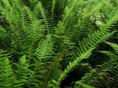 17 best images about plantas ornamentales on pinterest for Diferentes tipos de plantas ornamentales
