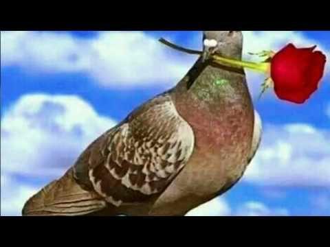 अब तो आजा मोहन प्यारे मधुर सुना दो गाना, morning song, krishan bhajan, shyam bhajan - YouTube