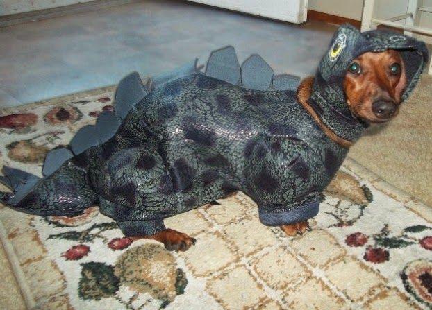 Halloween Animal: Disfraces terroríficos! Disfraces de mascotas originales y divertidos