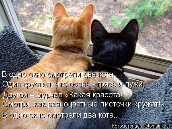 Осенняя котоматрица и коты цвета осени. Обсуждение на LiveInternet - Российский Сервис Онлайн-Дневников