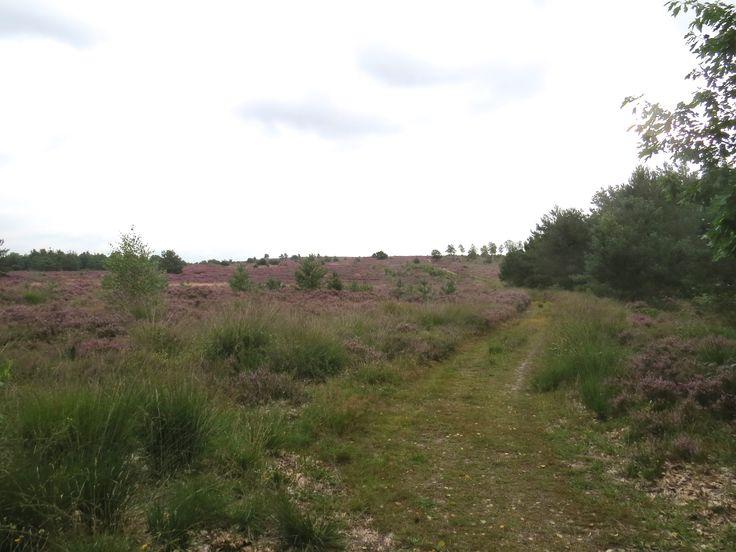 2014-08 Wandelen over de heide van de Sprengenberg. Uitzicht vanaf de Van Heekweg.