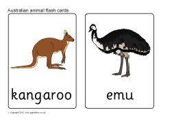 Australian animal flash cards