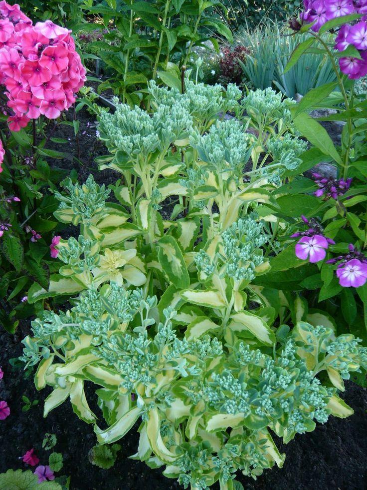 Растения высотой до 40см – 29 фотографий