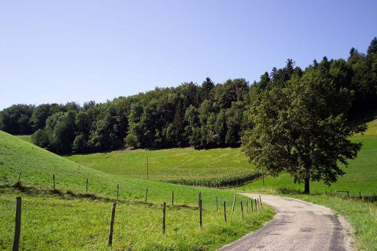 Circuit pédestre : La TençonLa BuisseItinéraire de randonnée pédestre, Sports pédestres