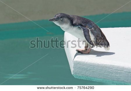 Penguin Jump Stock Photos, Images, & Pictures | Shutterstock