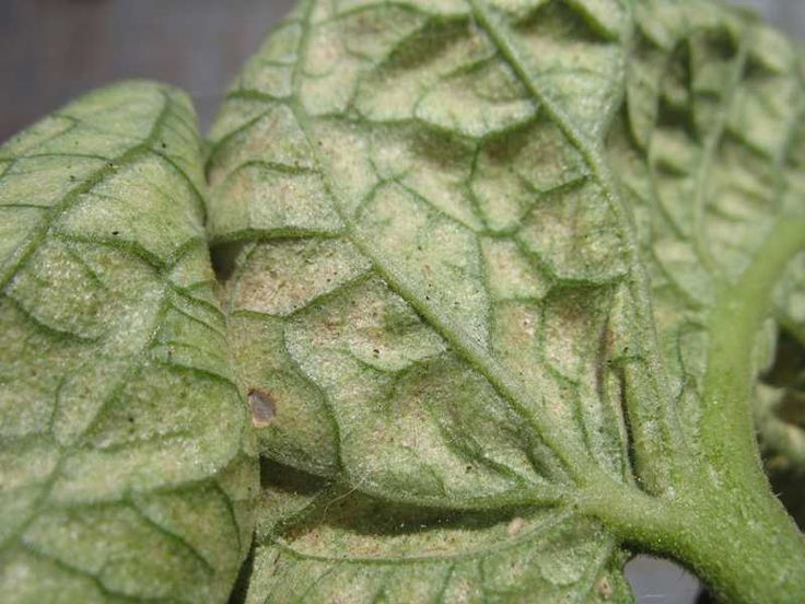 Check apples for spider mites in week 4 of April.
