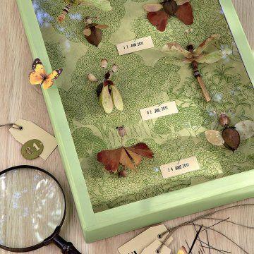 Créer une fausse collection d'insectes