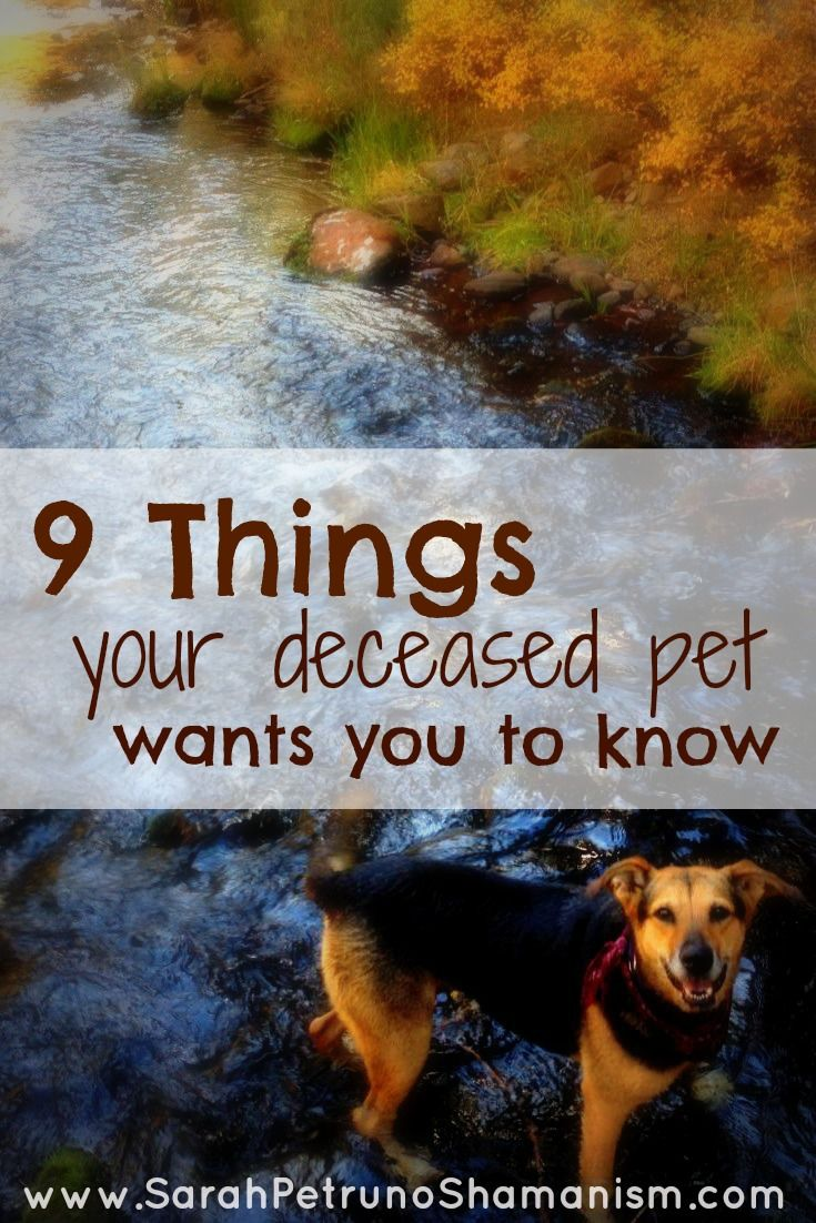 9 things your deceased pet wants you to know <3