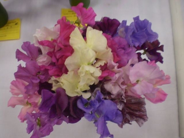 Sweet Pea's - beautifully fragrant, colours range from white's through pinks to purples and reds.