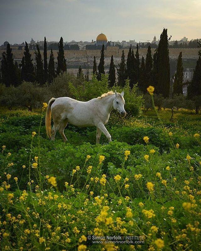 @eye.on.palestine 🇵🇸 أسعد الله صباحكم بكل خير ... نتمنى لكم يوما سعيدا . . Good morning my friends .. wish you a happy day 😃 . . #Palestinian #picoftheday #photooftheday #bestoftheday #instagood #life #islam #hijab #ksa #usa #uae #uk #فلسطين  #القدس #الامارات #السعودية #me #GoPro #qatar #Turkey #هاشتاج #قطر #الكويت #Palestine #تركيا #Istanbul