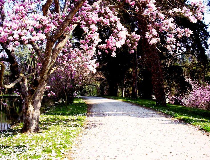 33 fantastiche immagini su il giardino all 39 inglese su - Giardini e fiori ...