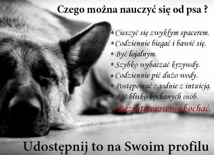 Czego można nauczyć się od psa