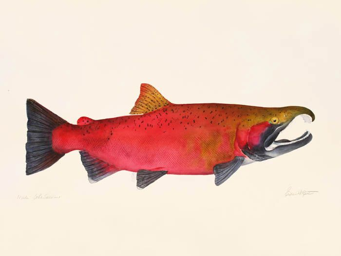 1000 images about salmon on pinterest glass art how to for Pacific northwest fish