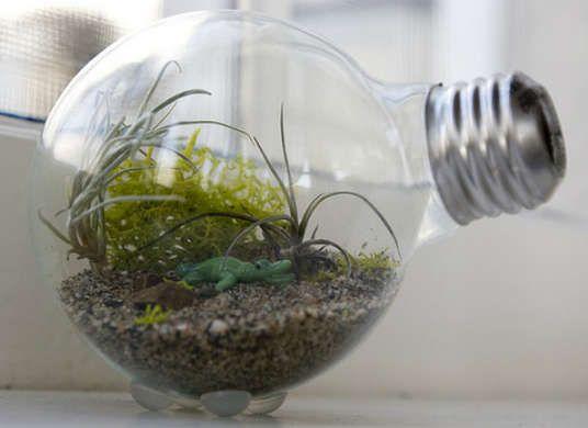 Light Bulb Terrarium - How to Build a Terrarium