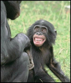 """Young bonobo shows an expressive """"grin"""" to its parent."""