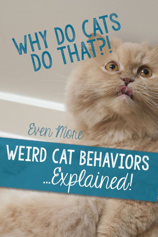 Why Does My Cat Do That?! Even More Weird Cat Behaviors