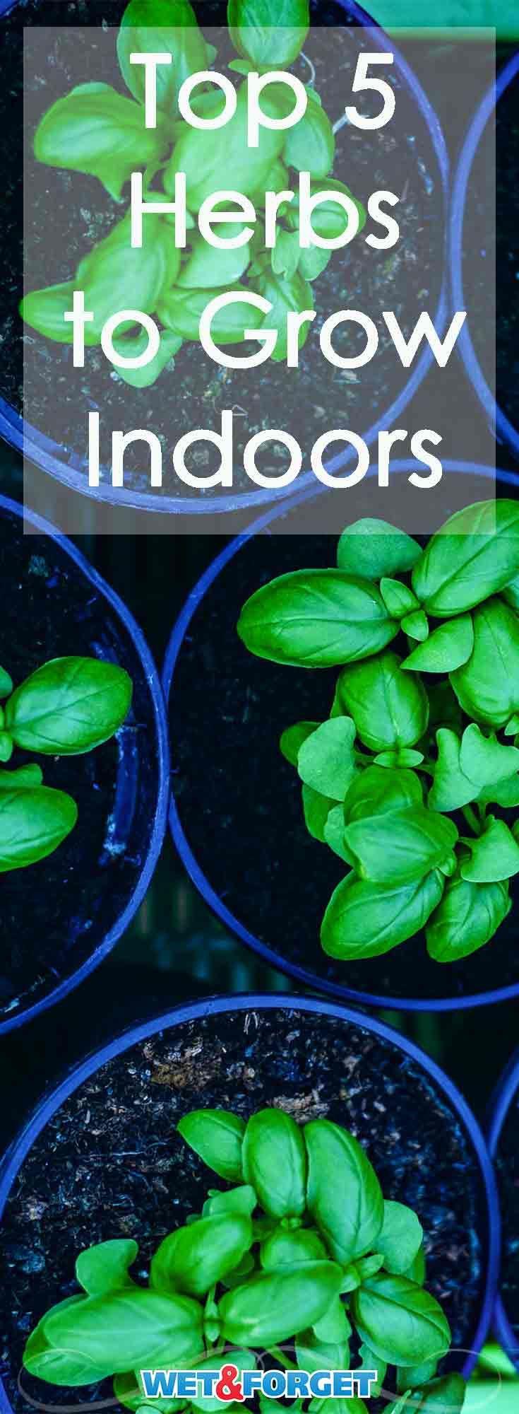 best 25 growing herbs indoors ideas on pinterest growing plants indoors how to grow herbs. Black Bedroom Furniture Sets. Home Design Ideas