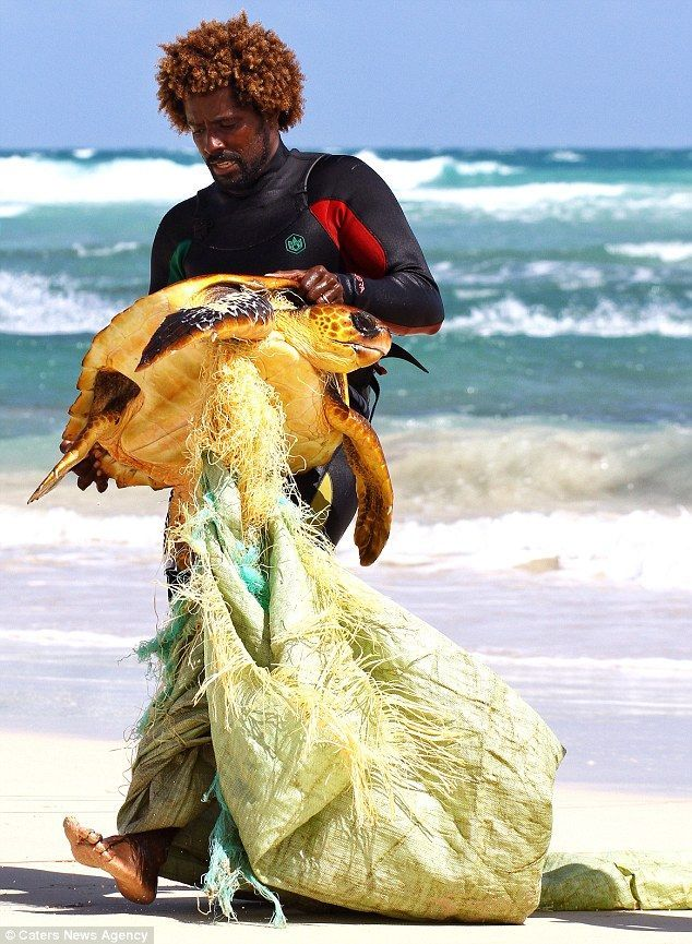 Endangered animals found living in debris and swimming in ...