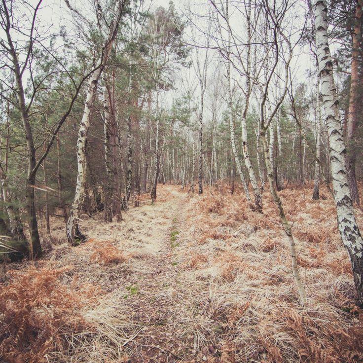 Bild 35 - Zadlitzbruch in der Dübener Heide bei Torgau | © Michael Eichhorn #zadlitzbruch #dübener_heide #naturschutzgebiet #sachsen #saxony #ausflugsziel #torf #moor #hochmoor #wandern #dübenerheide #duebenerheide #torgau #baddueben #baddüben #wald #sumpf #sumpfgebiet #natur #naturschutz #reservat #biosphäre #biosphere #farn #naturpark #falkenberg #trossin #dresden #nordsachsen #leipzig #sehenswürdigkeit #ziel #sonnentau #sumpfdotterblume #kranich