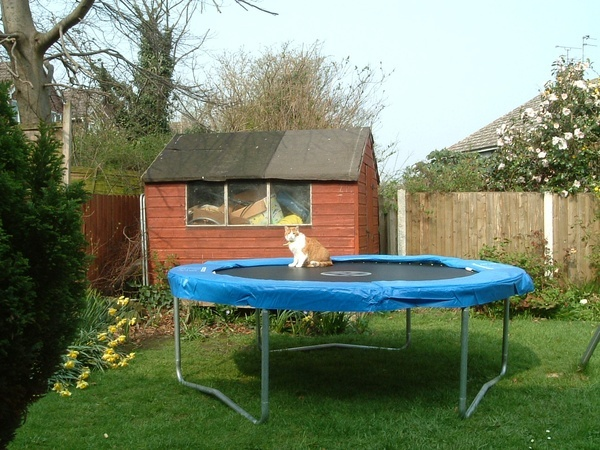 To keep fit, Ginger likes trampolining. just-ginger