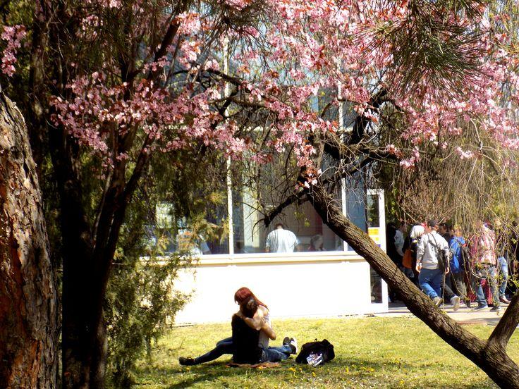 Snapshot on Spring
