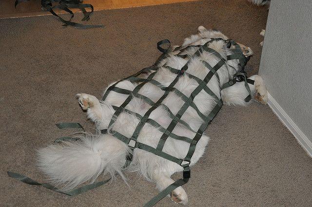 Tie down the dog in Rainger! #RAINGLERNETS #MILSPECGEAR #JEEPWRANGLERNETS http://www.raingler.com/#!jeep-merchandise/ch9y