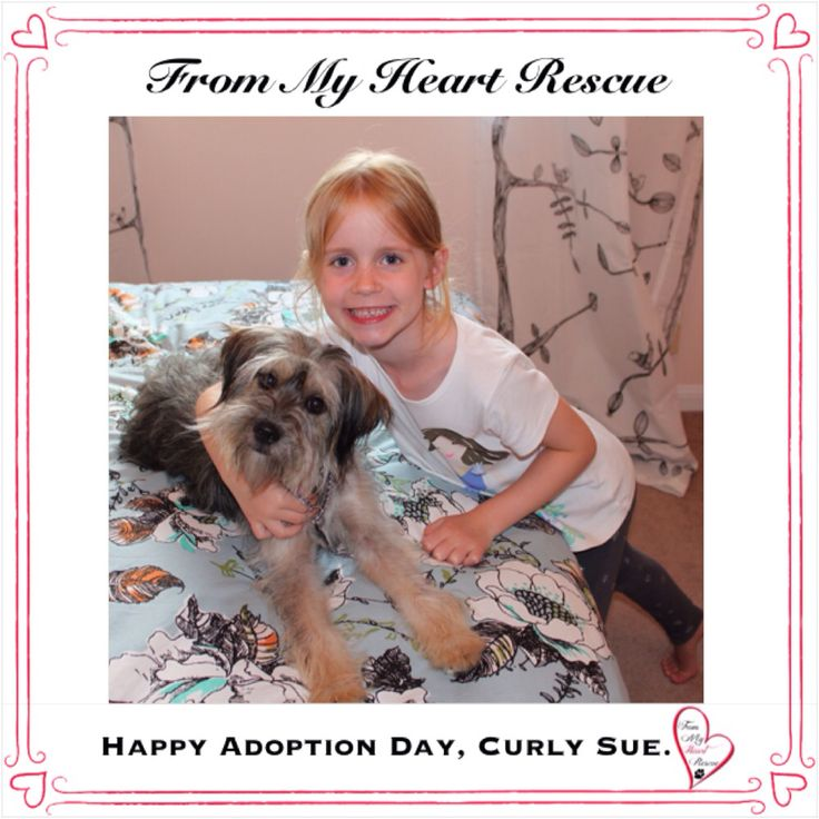 #Please ❤️+ #Pin #FMHR #FromMyHeartRescue #RescueWithoutBorders #SavingOneDogAtaTime ~ #Happy #Adoption #Day #CurlySue #aka #Rosie *Many thanks to Melissa, Sandra and Tammie's family, for all their fabulous volunteer work behind the scenes. ❤️ *Thank you *Info, Foster, Adoption, PayPal & e-transfer: frommyheartrescue@hotmail.com *Our Vets: Brock St. Animal Hospital/FMHR 905-430-2644 *Fundraising & Volunteering: FMHRfundraising@hotmail.com    *Find Us: FB, Twitter, IG, YouTube & Google+