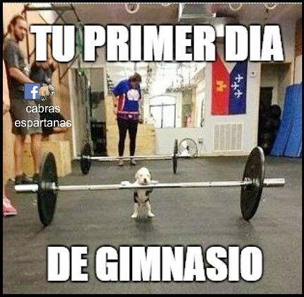 M s de 25 ideas incre bles sobre memes de gimnasio en for Cual es el gimnasio mas cercano