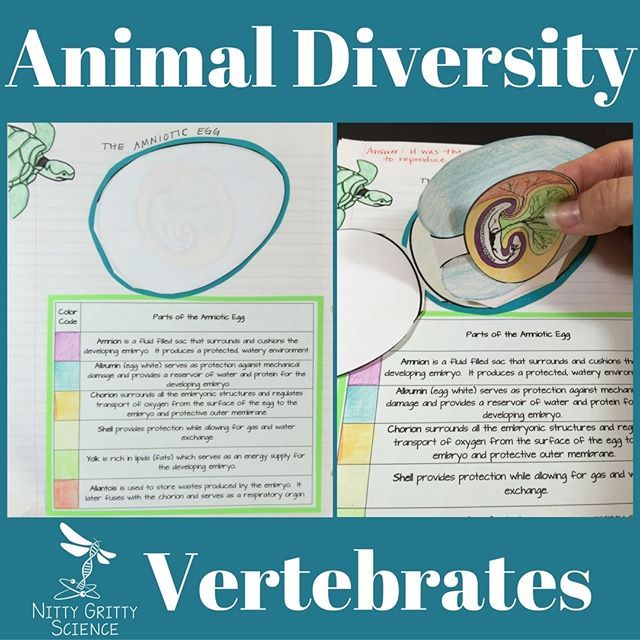an introduction to the animals and their species mammals reptiles arthropods and aves Birds compose a diverse class (aves) of species, as dissimilar as tiny darting hummingbirds and 8-foot flightless ostriches, with about 9,000 living species known.