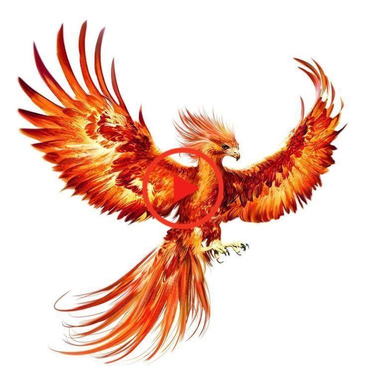 Mein Phoenix