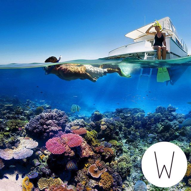 Great Barrier Reef er et af de mest fantastiske steder at dykke og snorkle - hvad venter du på? #GBR #GreatBarrierReef #Queensland #Adventure #Scuba #diving #Snorkling #culture #WunderbirdTravel #Instafollow #Cool #Experience #Ferie #Minder #Rejse #Oplevelser #Instalikes #RejserTilAustralien #Backpacker #Kultur #Arkitektur #Historie #snorkle #Clear #Water #Beauty by wunderbirdtravel http://ift.tt/1UokkV2