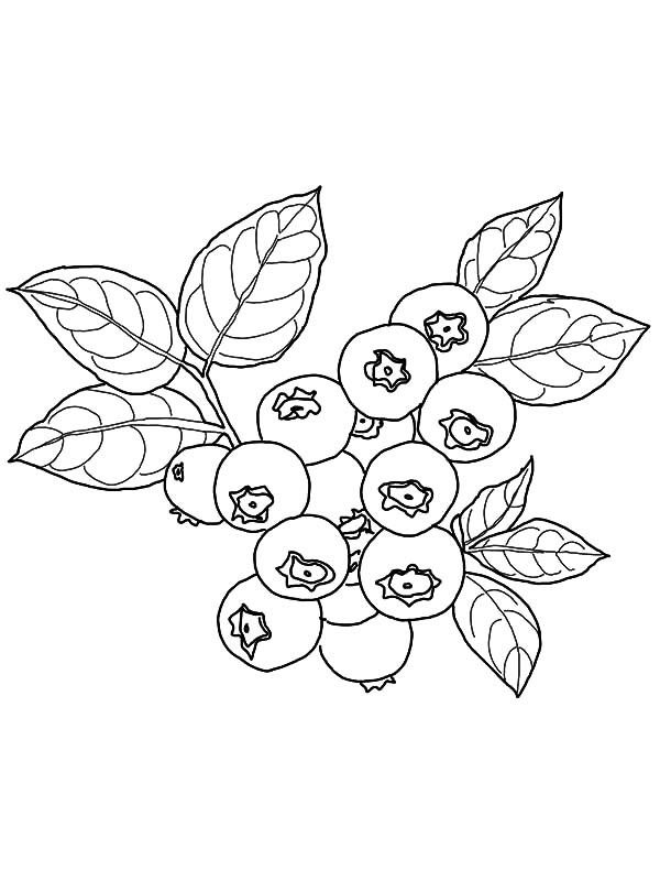 Blueberry Coloring Page For Print Free With Images Coloring Pages
