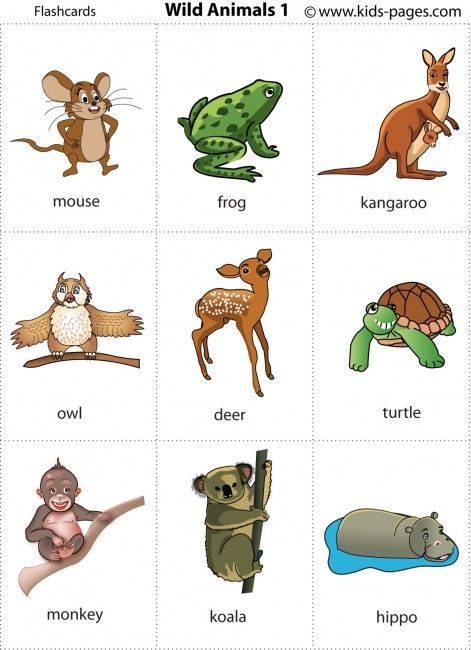 Wild animals printable for poster or game cards